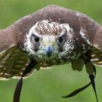 Le bestiaire aéronautique : avions au nom d'animaux